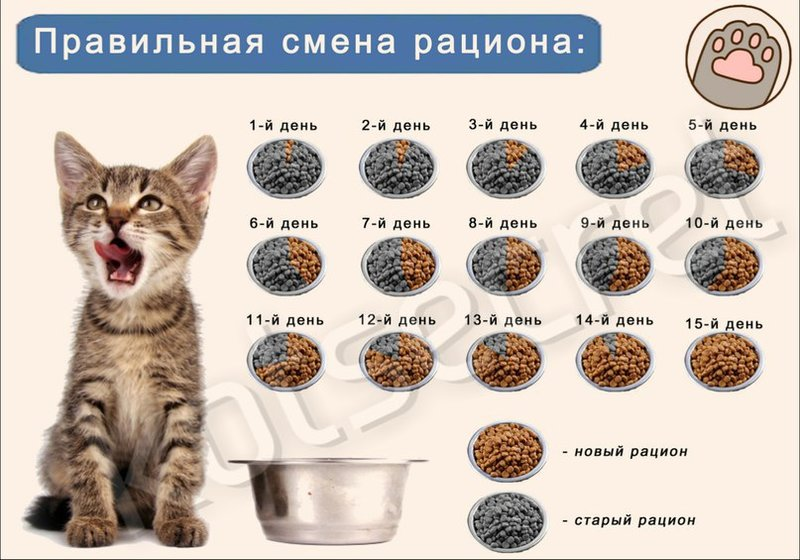ак перевести котенка на другой корм